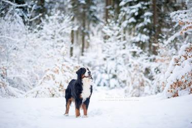 Winter Wonderland by Tiefenschaerfe