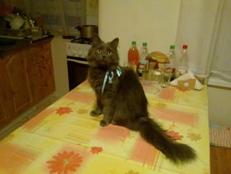 KITTYCAT INVASION by Weresquirrel94