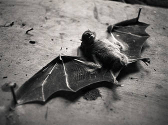Bat by yox