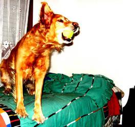 Saturated Dog by aeremita