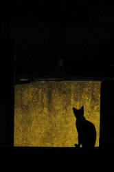 Contrast The Cat by aeremita