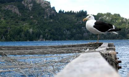 Waiting Seagull by aeremita