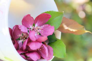 Cup full of Blossom by Sugar-Senshi