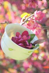 Tea Tree 3 by Sugar-Senshi