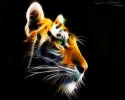 Amur Tiger by Lolly1123