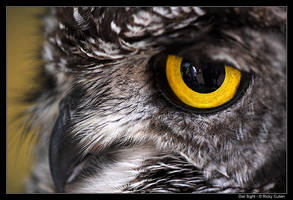 Owl Sight by ClawzSkunk