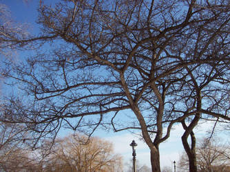 Look, Another Tree by Angel-Escondida