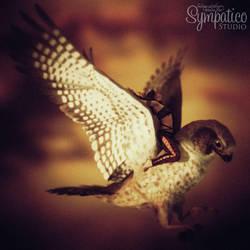 Songbirds Remix: Birds of Prey by Saidge42