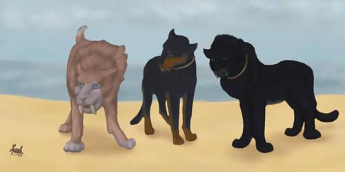 Korung: Aido, Saber + Zaki by kittensune