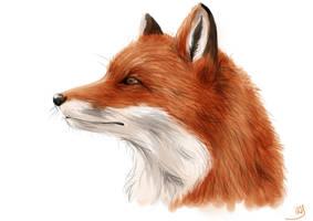 Fox by TheReaperKaj