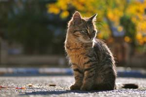 Kitty by BurakSsl