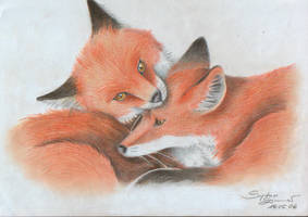 Young Foxes by kiwi2710