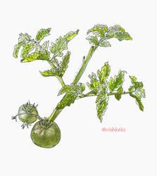 Green tomatoes by VishKeks