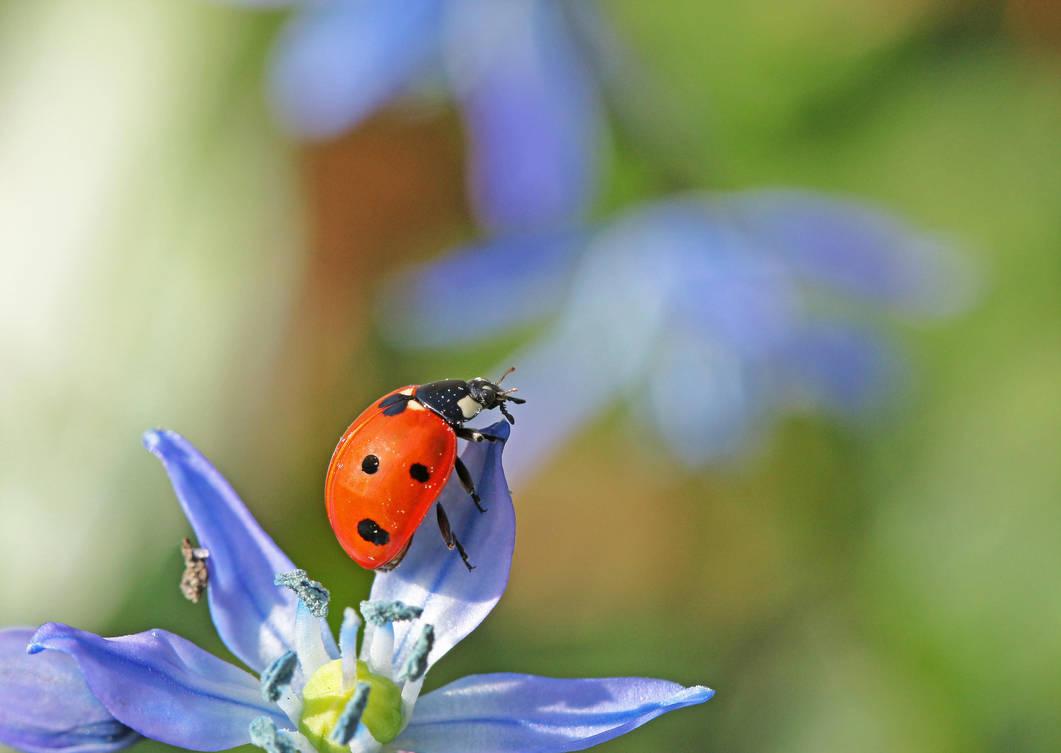 Let me introduce myself: It's bug... Ladybug by clochartist-photo