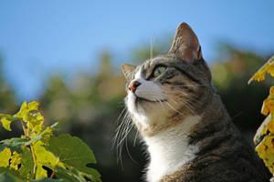 Aristocat... by clochartist-photo