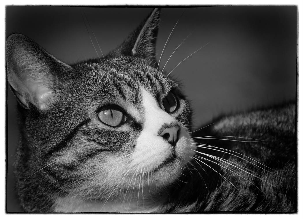Today I'm just black and white... by clochartist-photo