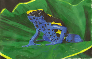 Poison Dart Frog by AlynC
