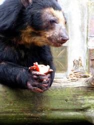 Bearbear by Tyziel