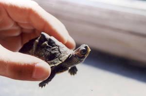 turtle by jhinjhak