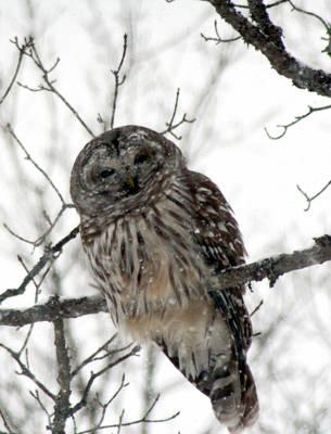 Jamis The Owl II by Sssorry