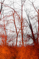 Riverbank Texture Stock by redwolf518stock