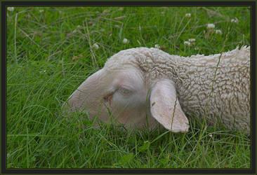 Sheep 2 by caro77