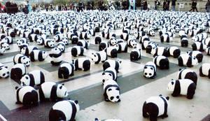 Pandas by noelja