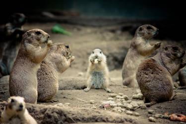 Prairie Dogs: yum yumz by Laiven2150