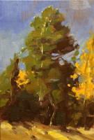West Coast Pine by FineArtCandice