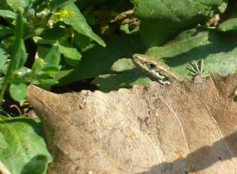 Little lizard 2 by cirelin