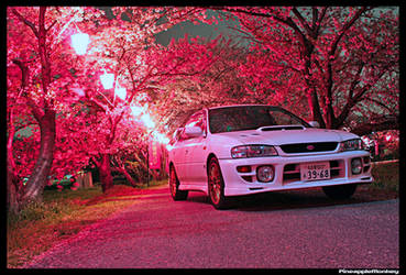 Cherry Blossoms by PineappleMonkey