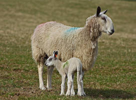 Proud Mum by BlonderMoment