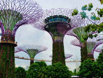 Garden by the bay by BlonderMoment