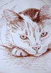 Cat ink drawing by gosia-jasklowska