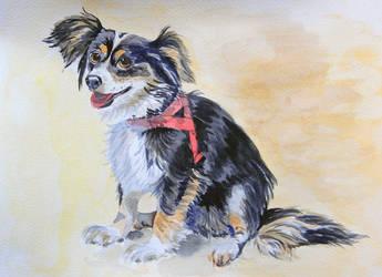 Figa - dog watercolor by gosia-jasklowska