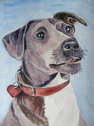 Markiz - dog watercolor by gosia-jasklowska