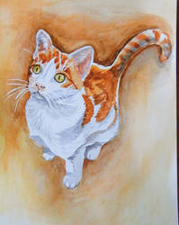 Sloneczko the cat - watercolor by gosia-jasklowska