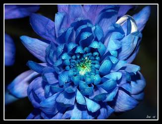 Blue beauty... by Kaffeman