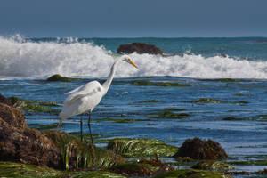 El Pescadorcito by Vespertine420