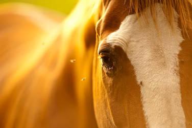 Horse by SlinkyJynx