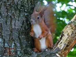 Squirrel 95 by Cundrie-la-Surziere
