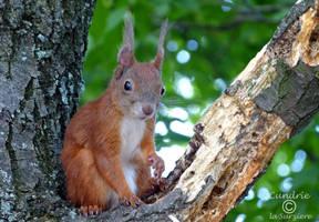 Squirrel 138 by Cundrie-la-Surziere