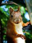 Squirrel 257 by Cundrie-la-Surziere