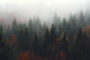 Autumnal Addiction by Serjia