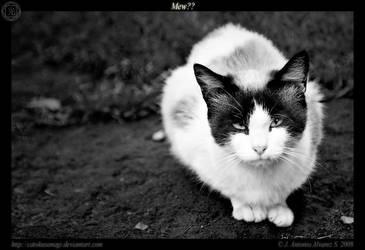 Mew?? by CatoKusanagi