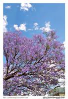 Day 286: Mexican Sakura by CatoKusanagi