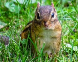 Did Someone Say Peanuts? by CRG-Free