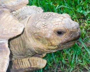 Throwback Thursday ~ Tortoises Can't Swim by CRG-Free
