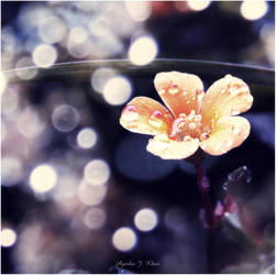 Signs of spring by iAJK