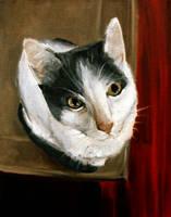 Kitty by vladimatrix